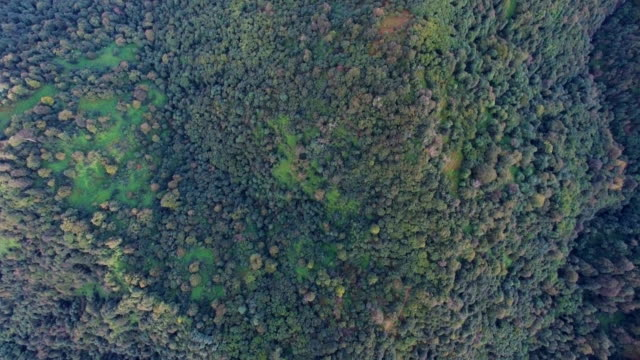 vertical aerial/forest in the caucasus mountians, - vertical stock videos & royalty-free footage