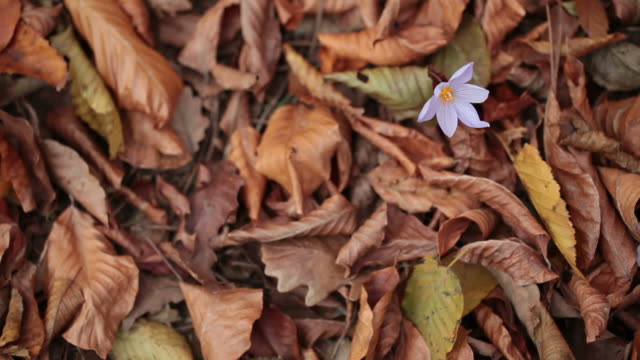 vídeos de stock, filmes e b-roll de hd: vertical caído folhas de outono - estampa de folha