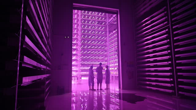 vertical farm team approaching growing chamber in silhouette - interactivity stock videos & royalty-free footage