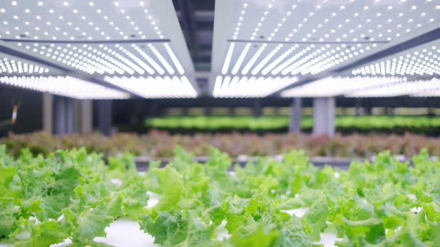 vertical farming offers a path toward a sustainable future - biotechnology stock videos & royalty-free footage