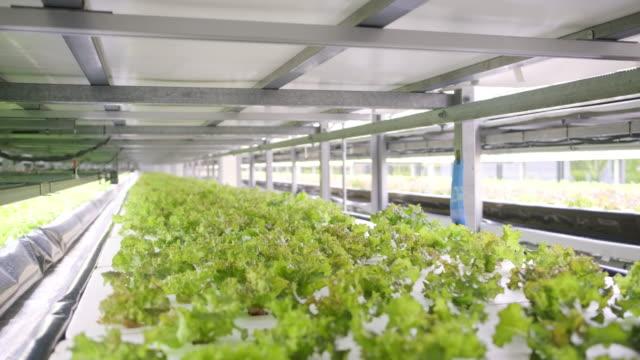 垂直農業は持続可能な未来への道を提供する - 農業点の映像素材/bロール