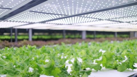 vidéos et rushes de l'agriculture verticale offre une voie vers un avenir durable - culture hydroponique