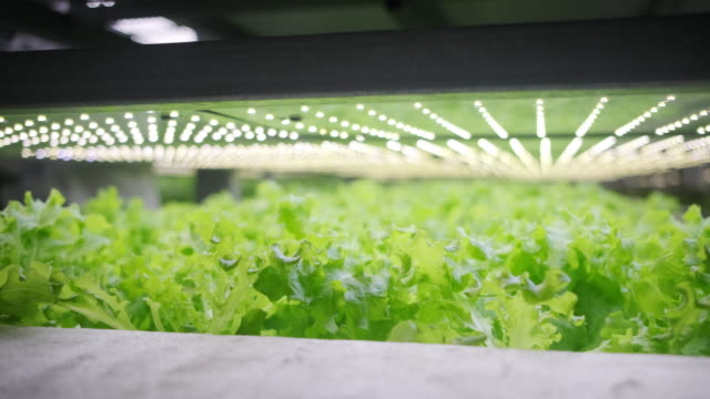 vertical farming offers a path toward a sustainable future - led light stock videos & royalty-free footage