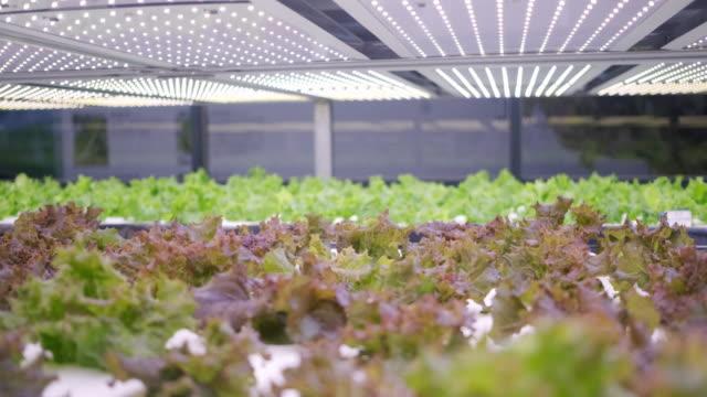 vídeos y material grabado en eventos de stock de la agricultura vertical ofrece un camino hacia un futuro sostenible - biotecnología