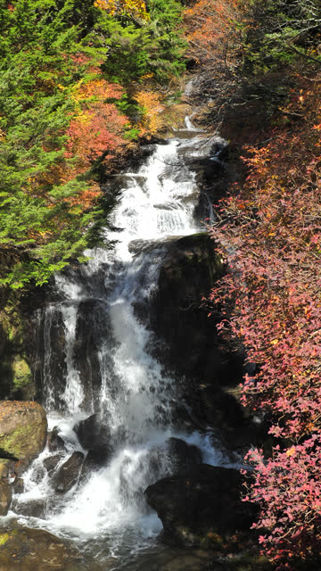 vertical japan waterfall with autumn leaf color - vertical stock videos & royalty-free footage