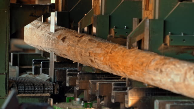 vertical saw cutting a log in a lumber mill - lumberyard stock videos and b-roll footage