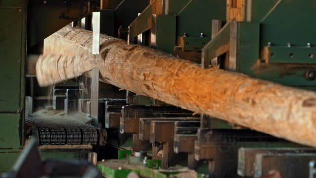 vertical saw cutting logs - timber stock videos and b-roll footage