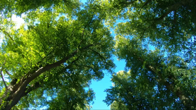 vertical tracking shot of tree canopy. - tree canopy stock videos & royalty-free footage