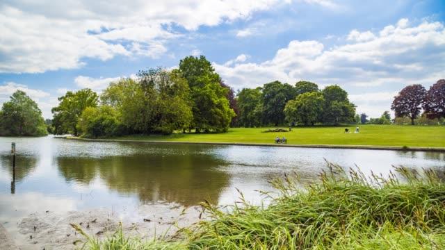 verulamium park, st albans - tree stock videos & royalty-free footage