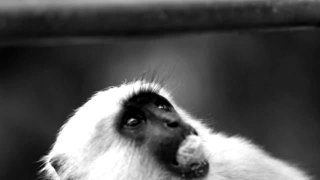 vídeos y material grabado en eventos de stock de mono verde - monocromo imagen virada