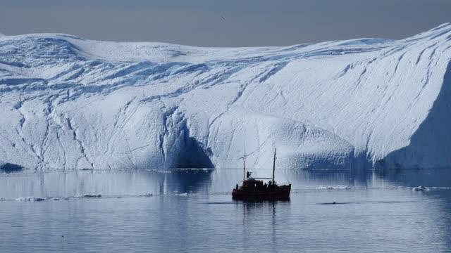 ganz in der nähe das ausflugsboot wale tauchen - cetacea stock-videos und b-roll-filmmaterial