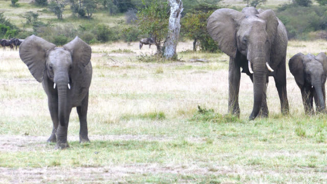 Very Dangerous Condition at Wildlife with Mother and baby elephant