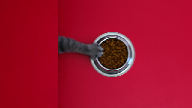 very delicious cat food. the hungry cat managed to pull the dry cat food bowl on the table towards itself. knolling concept in studio - claw stock videos & royalty-free footage