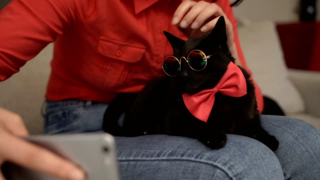 very very funny cat with eyeglasses and bow tie - clothing stock videos & royalty-free footage
