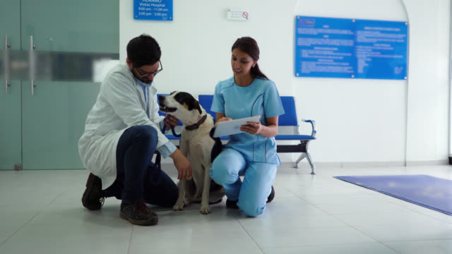 vet checking mixed breed dog while assistant takes notes on tablet - vet stock videos & royalty-free footage