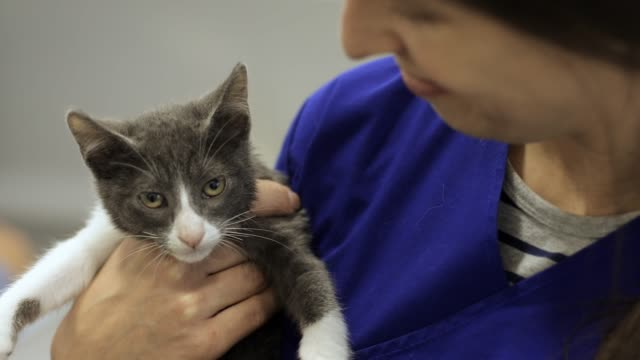 vet holding kitten - care stock videos & royalty-free footage