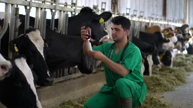 vet injection for cow - syringe stock videos & royalty-free footage