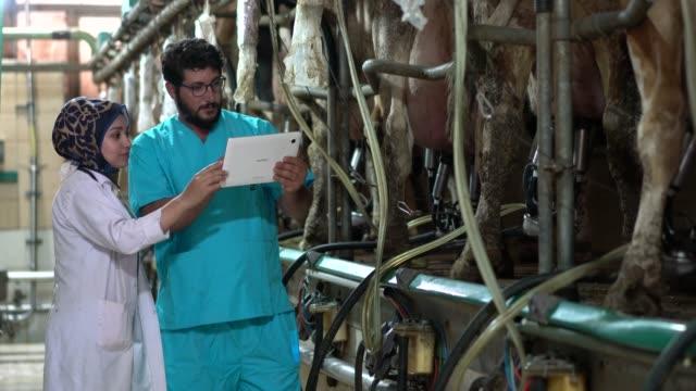 vidéos et rushes de vétérinaire inspectant les bovins pendant qu'ils sont traites - qualité