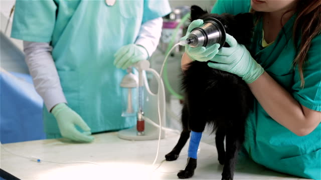vet preparing dog for surgery - anesthetic stock videos & royalty-free footage