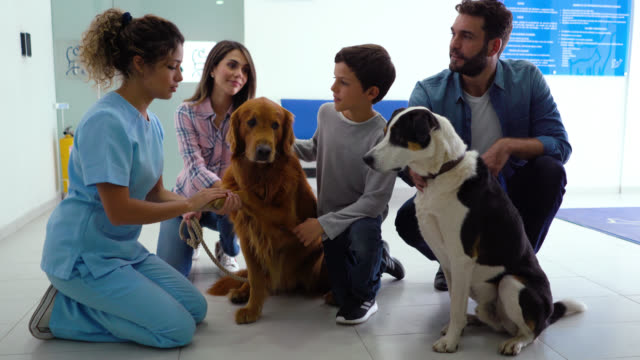 vet talking to a happy latin american family with their dogs at the animal hospital - animal hospital stock videos & royalty-free footage