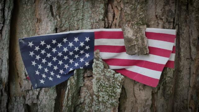 Veterans Memorial amerikanska flaggan i träd 4k