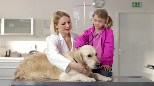 veterinarian and little girl using a stethoscope - female animal stock videos & royalty-free footage