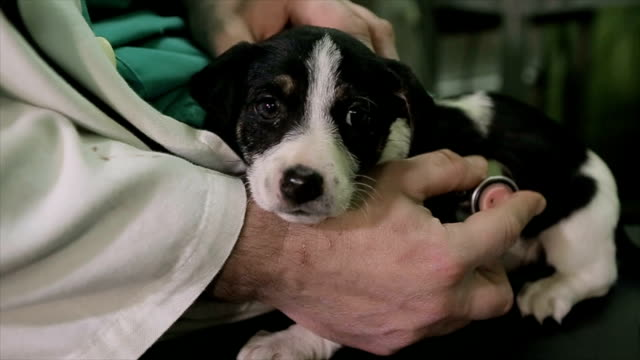 veterinarian checking respiratory tract on puppy with stetoscope - rescue stock videos & royalty-free footage