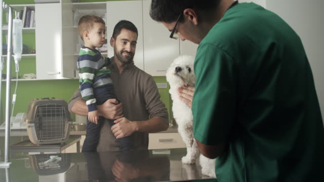 veterinarian examining a dog - hoozone stock videos and b-roll footage