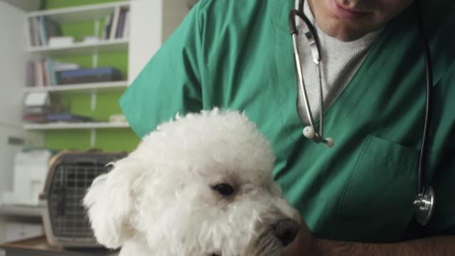 Veterinarian Examining A Little Dog