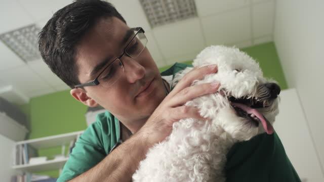 veterinarian examining a little dog - havanese stock videos & royalty-free footage