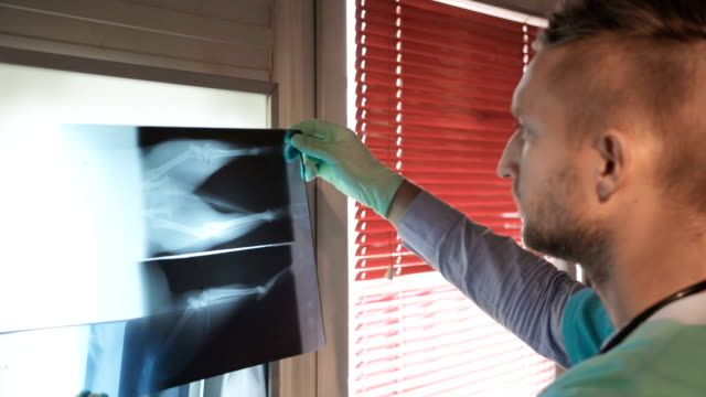 Veterinarian examining dog's x-ray image