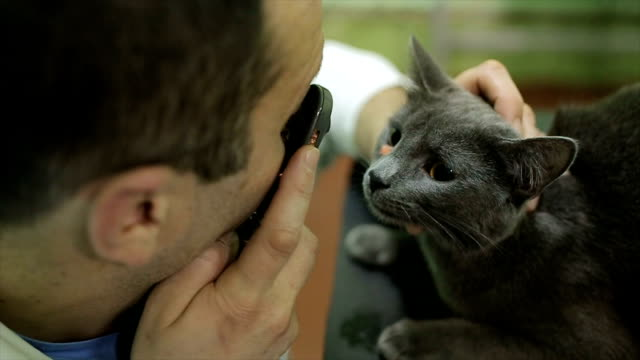 veterinarian examining eyes of a cat while doing checkup at clinic - veterinarian stock videos & royalty-free footage