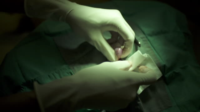 vidéos et rushes de veterinarian neuters a dog - human castration