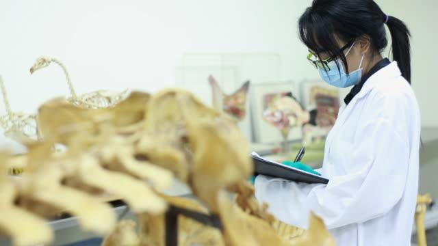 tierarzt - tierisches skelett stock-videos und b-roll-filmmaterial