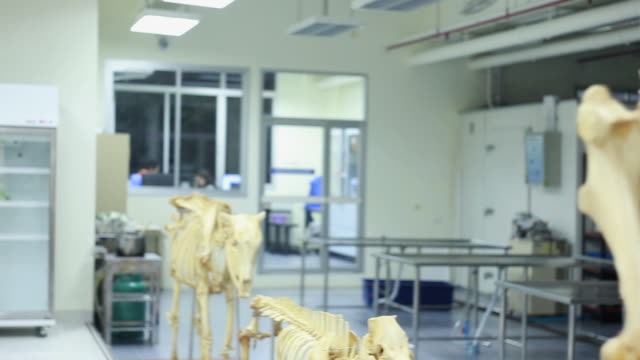 veterinarian - skeleton sled stock videos and b-roll footage