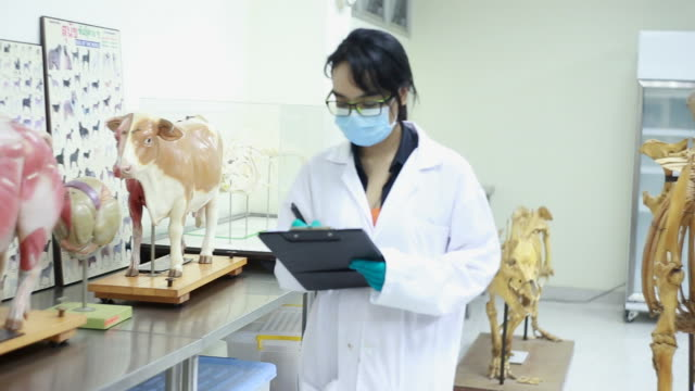 veterinarian - zoology stock videos and b-roll footage