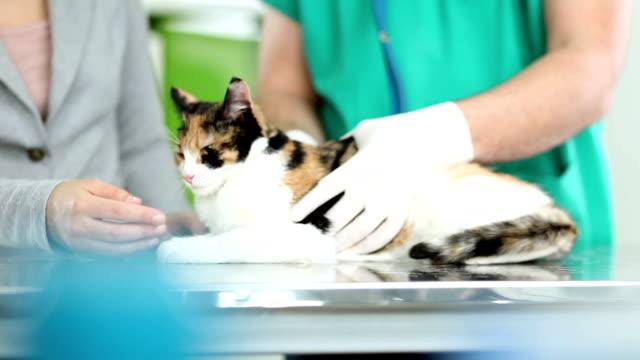 veterinary - domestic animals stock videos & royalty-free footage