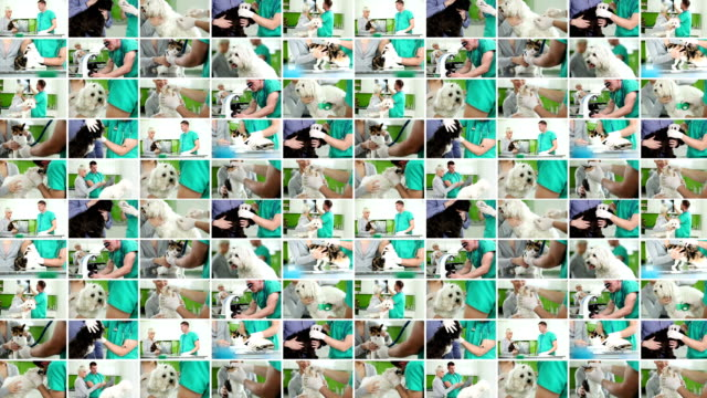 Veterinary. Video Wall.