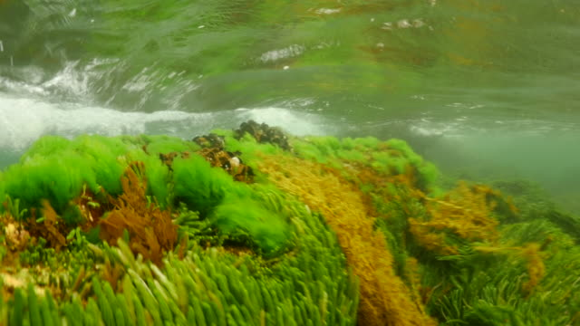 vibrant sea-life churns in the swell - seaweed stock videos & royalty-free footage