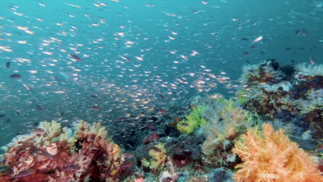 vibrant underwater coral reef with schools of fish - reef stock videos & royalty-free footage