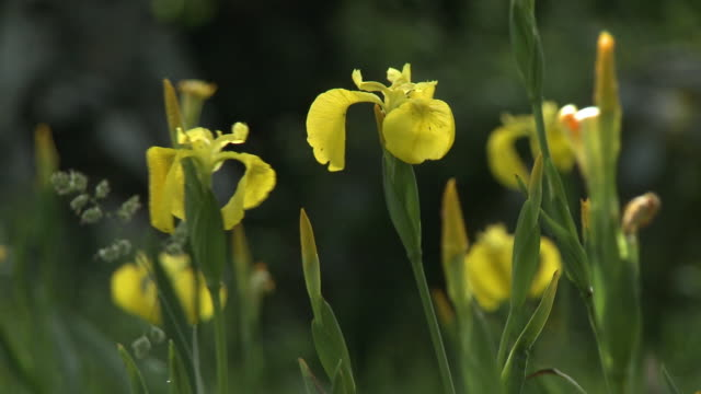 vibrant yellow wild orchids - orchid stock videos & royalty-free footage