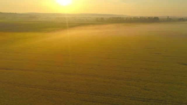 ws vibrant,idyllic yellow rapeseed oil field at sunrise,slovenia - rapeseed oil stock videos and b-roll footage