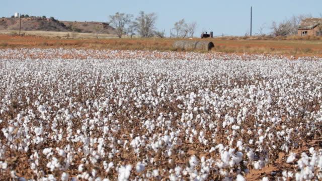 vídeos de stock, filmes e b-roll de vídeo em hd abandonado casa e algodão recorte texas - cotton
