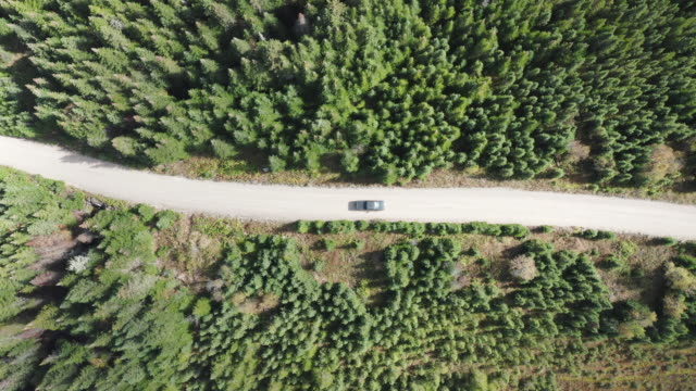 video, aerial view of a vehicle on road leading through beautiful colorful autumn forest in sunny fall, quebec, canada - pick up truck stock videos & royalty-free footage