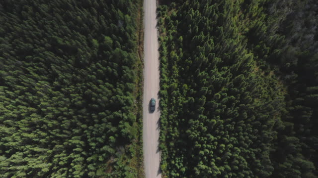 video, aerial view of a vehicle on road leading through beautiful colorful autumn forest in sunny fall, quebec, canada - canada stock videos & royalty-free footage