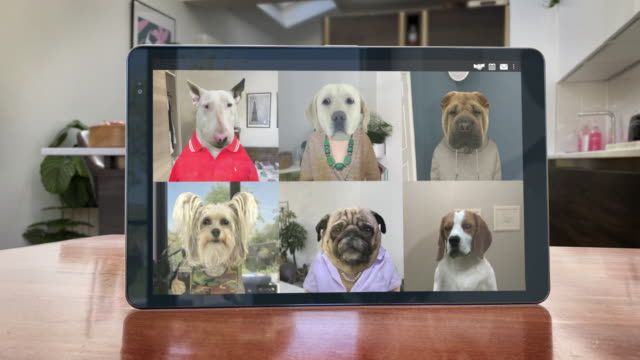 video app conference call - six dogs catch up - looping video - table stock videos & royalty-free footage