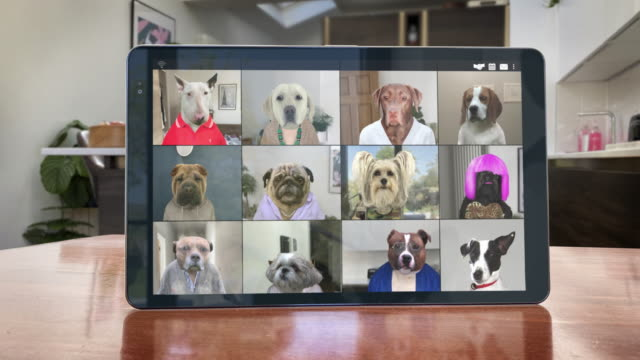 video app conference call - twelve dogs catch up - looping video - domestic kitchen stock videos & royalty-free footage