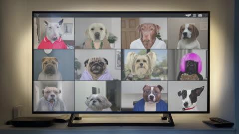 stockvideo's en b-roll-footage met video app conference call - twaalf honden catch up op groot scherm - looping video - animation moving image