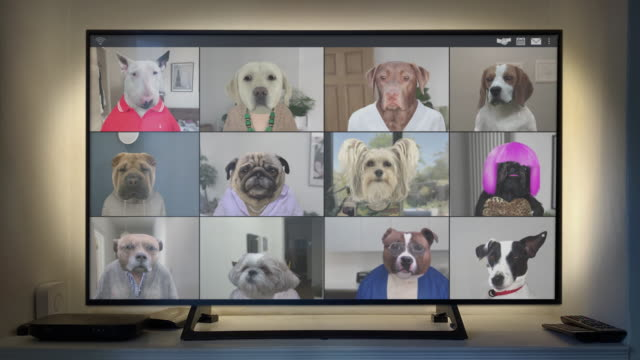 vídeos de stock e filmes b-roll de video app conference call - twelve dogs catch up on big screen - looping video - animation moving image