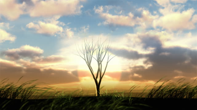 Video background. Tree growing at sunrise. Object in the middle.